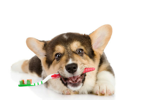 The Importance of Oral Healthcare for Dogs and Cats