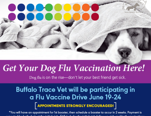 Dog Flu Vaccination