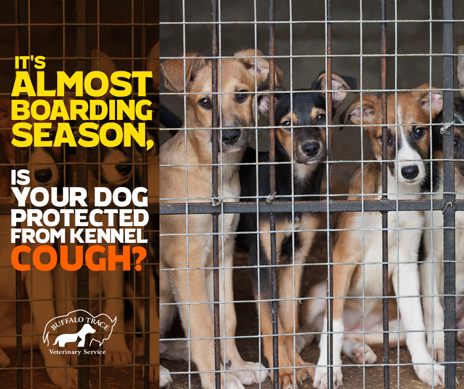 It's Almost Boarding Season, is Your Dog Protected from Kennel Cough?
