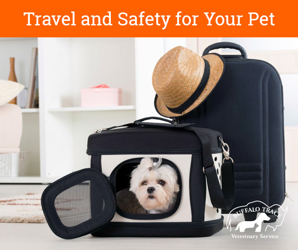 Travel and Safety for Your Pet